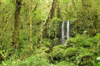 32 Tanzania - Kilimanjaro NP: Marangu Route - day 1 - waterfall, in the rainforest - photo by A.Ferrari