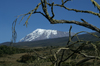40 Tanzania - Kilimanjaro NP: Marangu Route - day 2 - Mount Kilimanjaro, the Kibo peak seen from the moorlands - photo by A.Ferrari