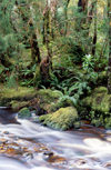 Bird River, West Coast council, Tasmania, Australia: Temperate Rain Forest - rapids - photo by A.Bartel