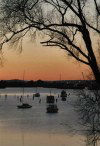 Tasmania - Launceston: Tamar River - twilight (photo by Fiona Hoskin)