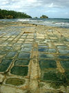 Australia - Tasmania - Tasmania - Tasman Penisula: tessellated Pavement (photo by Luca dal Bo)