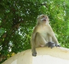 Thailand - Krabi: monkey (photo by Ben Jackson)