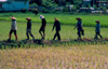 Thailand - Chiang Rai: Workers in the rice fields (photo by K.Strobel)