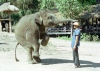 Chiang Mai: elephant show (photo by J.Kaman)