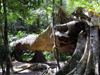 Thailand - Krabi: fallen tree in the forest (photo by Ben Jackson)