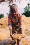 Timor Leste - Manatuto: Old lady cleans rice after the harvest
