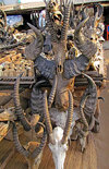 Lom�, Togo: Juju market - skulls and horns - all kinds of bizarre animal parts are used by local witches and traditional doctors - world�s biggest fetish market - March� des Fetiches Akodessewa - photo by G.Frysinger