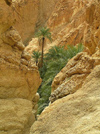 Tunisia - Chebika: a canyon by the mountain oasis (photo by J.Kaman)