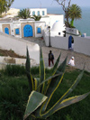 image of Tunisia - Sidi Bou Said: aloe vera on the slope (photo by J.Kaman)