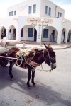 Tunisia - El Hamma: donkey in the souq (photo by M.Torres)