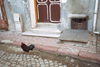 Istanbul, Turkey:  cockrel on a back street - photo by S.Lund