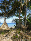 Funafuti atoll, Tuvalu: view of the lagoon side - common screwpine with large aerial roots - Pandanus utilis - photo by G.Frysinger