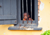 Entebbe, Wakiso District, Uganda: curious boy at the window of his house - steel bars - photo by M.Torres