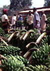 Uganda - Fort Portal - bananas at the market - photos of Africa by F.Rigaud