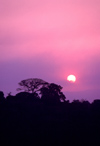 Uganda - Fort Portal - sunset - tree silhouette - photos of Africa by F.Rigaud