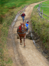 Transcarpathia / Zakarpattya, Ukraine: countryside around Jablonica - horse cart on a dirt road - photo by J.Kaman