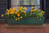 Boston, Massachusetts, USA: pansies in a window box of a classic brick house on Beacon Hill - photo by C.Lovell