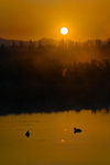 Yellowstone National Park, Wyoming, USA: ducks on the Yellowstone River at sunrise - photo by C.Lovell