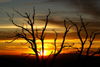 Mesa Verde National Park, Montezuma County, Colorado, USA: sunset seen from Park Point Overlook - dead tree silhouette - photo by A.Ferrari