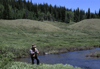 Rio Grande National Forest, Colorado, USA: fly fishing on the Weminuche Creek - angler - Colorado Rockies - photo by C.Lovell