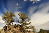 Rocky Mountain National Park, Colorado, USA: pinetrees grow on a rocky hill - sky with Cirrus clouds - photo by M.Torres