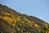 Roosevelt National Forest - Poudre Canyon, Larimer County, Colorado, USA: forest with Fall foliage above CO 14 road - Poudre Canyon Hwy - photo by M.Torres