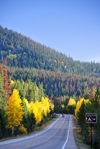 Roosevelt National Forest - Poudre Canyon, Larimer County, Colorado, USA: CO 14 - Poudre Canyon Hwy - fall foliage and the road near the exit to Aspen Glen camping ground - photo by M.Torres