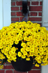 Portsmouth, New Hampshire, USA: vase with yellow flowers on Ceres St, Tugboat Alley - New England - photo by M.Torres