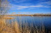 Bosque del Apache National Wildlife Refuge, Socorro County, New Mexico, USA: tranquil pond - photo by M.Torres
