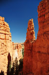 Bryce Canyon National Park, Utah, USA: Sunset Point - narrow passage with trees between rock fins - photo by M.Torres