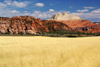 Zion National Park, Utah, USA: golden field along Kolob Terrace Road - photo by A.Ferrari