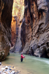 Zion National Park, Utah, USA: Virgin River Narrows - Wall Street section - angler - photo by B.Cain