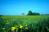 USA - farm (Pennsylvania): in the fields - rural scenic - agriculture - barn (photo by J.Fekete)