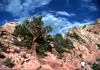 USA - Grand Canyon (Arizona): Tree, Rocks, Sky, and hikers - Photo by G.Friedman