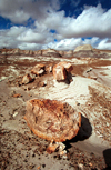 USA - Cocoa Mountains - Petrified Forest National Park (Arizona): petrified trees and sky - Photo by G.Friedman