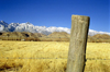 Death Valley (California): Fencepost and Mountains - landscape - Photo by G.Friedman