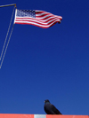 New York City: Stars Stripes and a pigeon - American flag and dove - photo by M.Bergsma