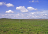 Kansas Tallgrass Prairie - photo by G.Frysinger