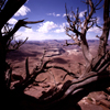 USA - Canyonlands National Park (Utah): dead tree and the Colorado Plateau - near Moab - photo by J.Fekete