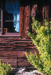 Pennsylvania, USA: detail of a log cabin with window and plant - photo by J.Fekete