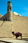 Camel outside Khiva City Walls, Uzbekistan - photo by A.Beaton