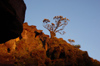 84 Venezuela - Bolivar - Canaima NP - Tree in the evening light, at the top of Roraima - photo by A. Ferrari