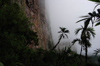 91 Venezuela - Bolivar - Canaima NP - vegetation at the foot of Roraima, in the fog - photo by A. Ferrari