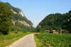 Ba Be National Park - vietnam: rural road and maize field - photo by Tran Thai
