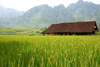Ba Be National Park - vietnam: rice field and house - photo by Tran Thai