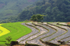 Ba Be National Park - vietnam: flooded rice terraces - photo by Tran Thai