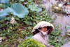 Vietnam - Hue - Thua Thien province: wearing a water-lilly as an hat - water-lilly collector - photo by N.Cabana