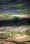 Vietnam - Lao Cai Province - northeast region - Hmong country: terraced rice paddies - photo by W.Schipper