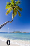 Tortola - Cane Garden Bay, British Virgin Islands: beach - coconut tree with swing (photo by David Smith)
