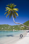 Tortola - Cane Garden Bay, British Virgin Islands: beach - coconut tree with tyre swing - photo by D.Smith